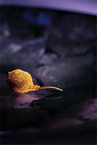 2012 - Micro Fish No Chips - Ultraviolet
